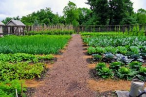 Чем отличаются огородничество и садоводство вид исползование земли