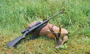 Наказание за охоту на косулю