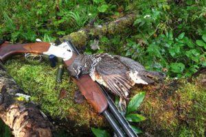 Правила осенней охоты на водоплавающую дичь 2019